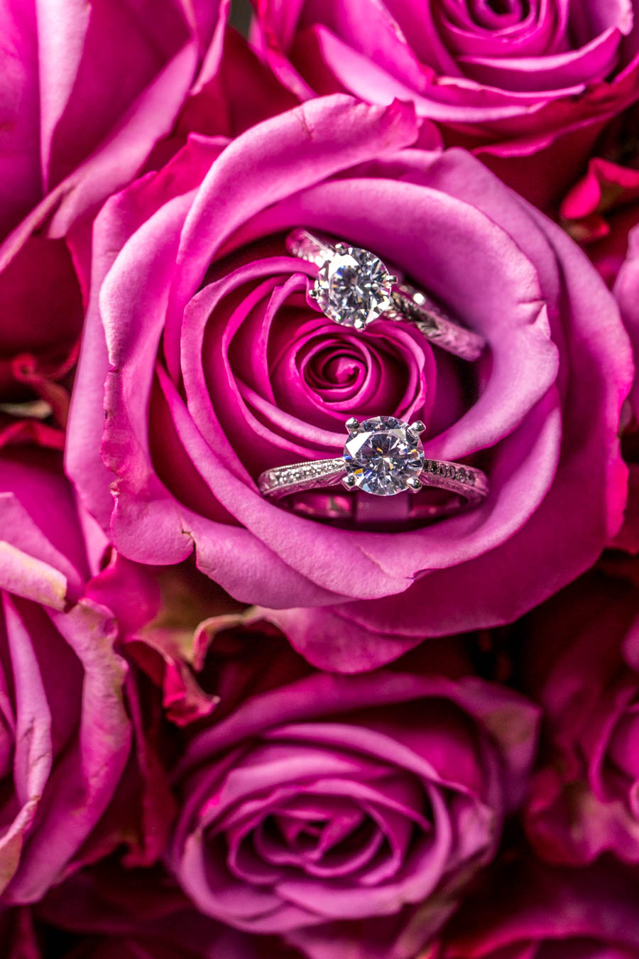 The Nina and Karly Rings / Image: Catherine Viox{ }// Published: 10.8.19