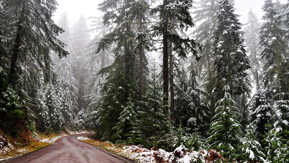 Christmas Tree Permits On Sale For Umpqua National Forest