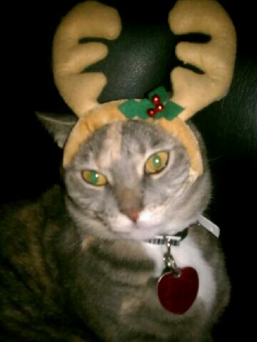 Reindeer Kitty