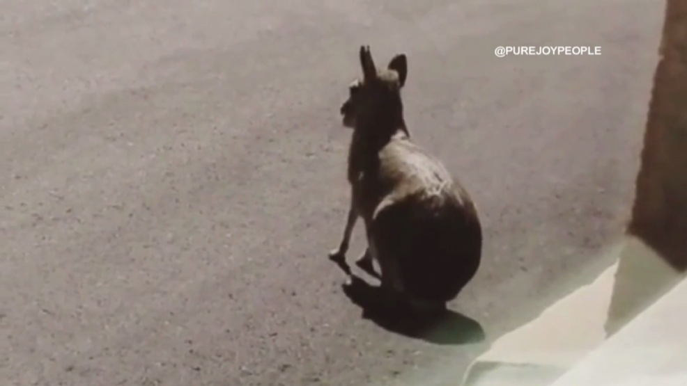 Exotic pet found loose in Vegas still hasn't been claimed by
