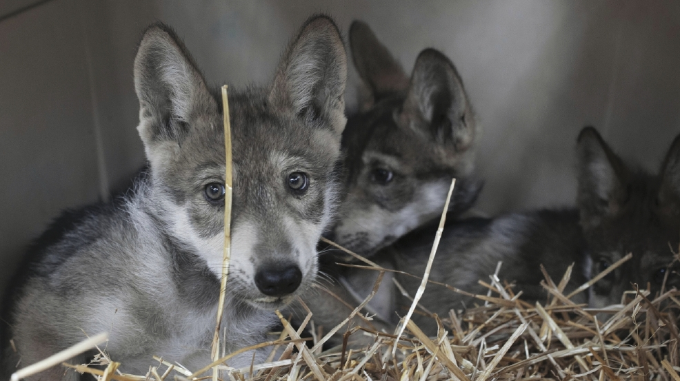 Wolf Haven_Photo by Annie Marie Musselman_Page 39.jpg