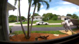 Package thief caught on camera stealing from Boynton Beach home