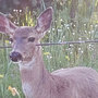 'Malicious intent to wound not one, but two deer': Sex offender charged with animal abuse