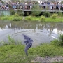 South Carolina accepts applications to hunt alligators
