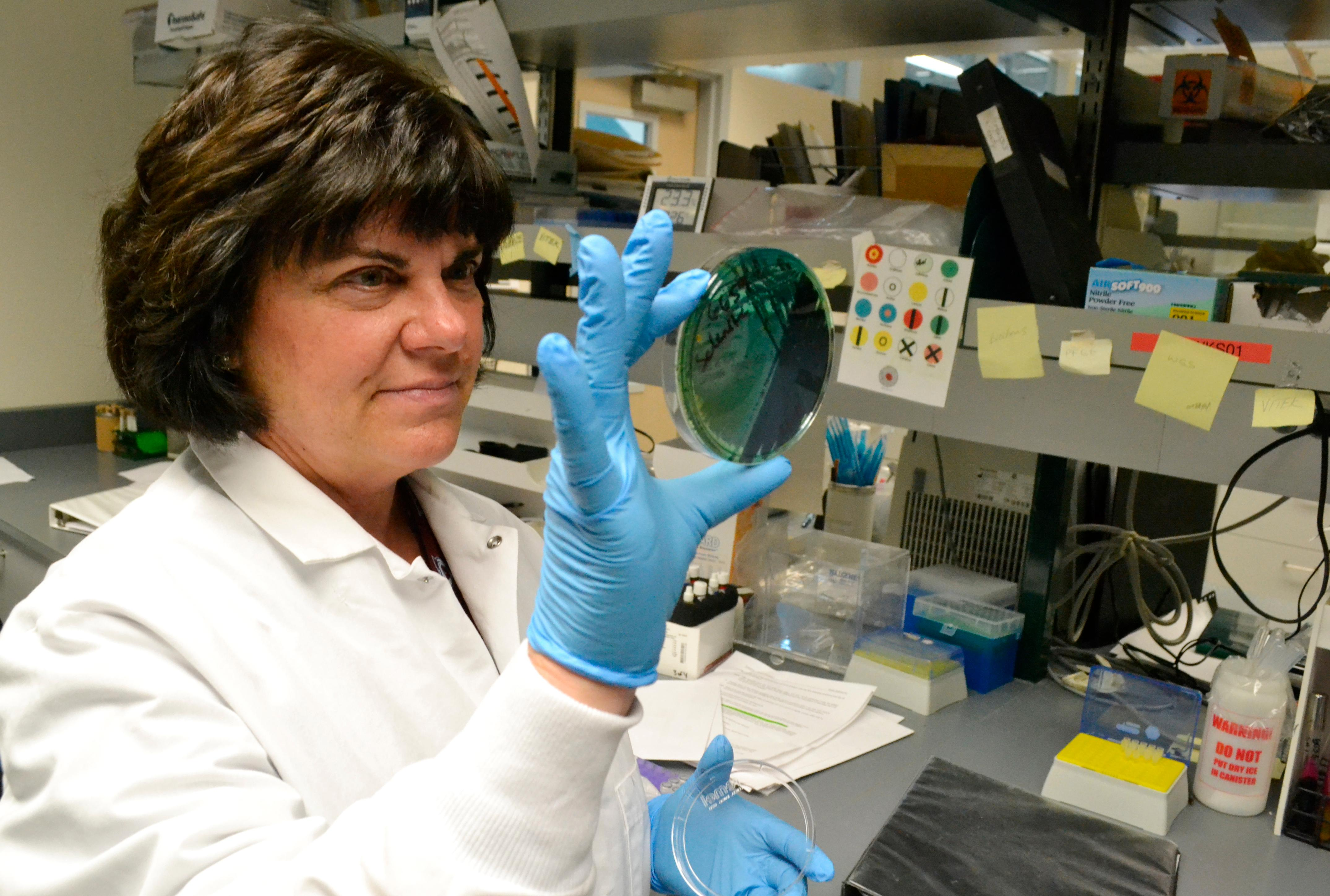 In this April 12, 2018 photo, scientist Karen Xavier holds a petri dish containing a stool sample of small bacteria colonies in Denver. DNA from samples like these are extracted and sequenced to help health investigators more quickly determine the source of a food borne illness outbreak.(AP Photo/P. Solomon Banda)