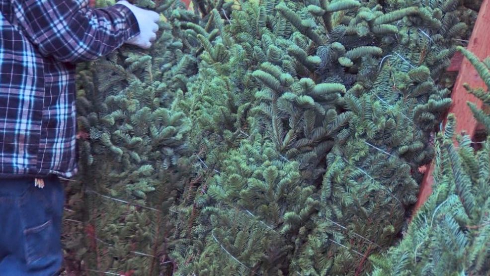 buy a christmas tree to help children in need - Christmas Tree Buy