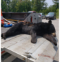 Bear hit, killed on M-22 in Leelanau County
