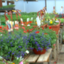 The start of spring and gardening: What you need to know