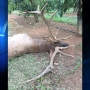 OSP: Poacher sought after bull elk found unlawfully killed in Hood River County