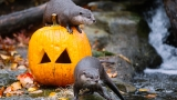 Photos: Zoo animals celebrate Halloween the only way they know how