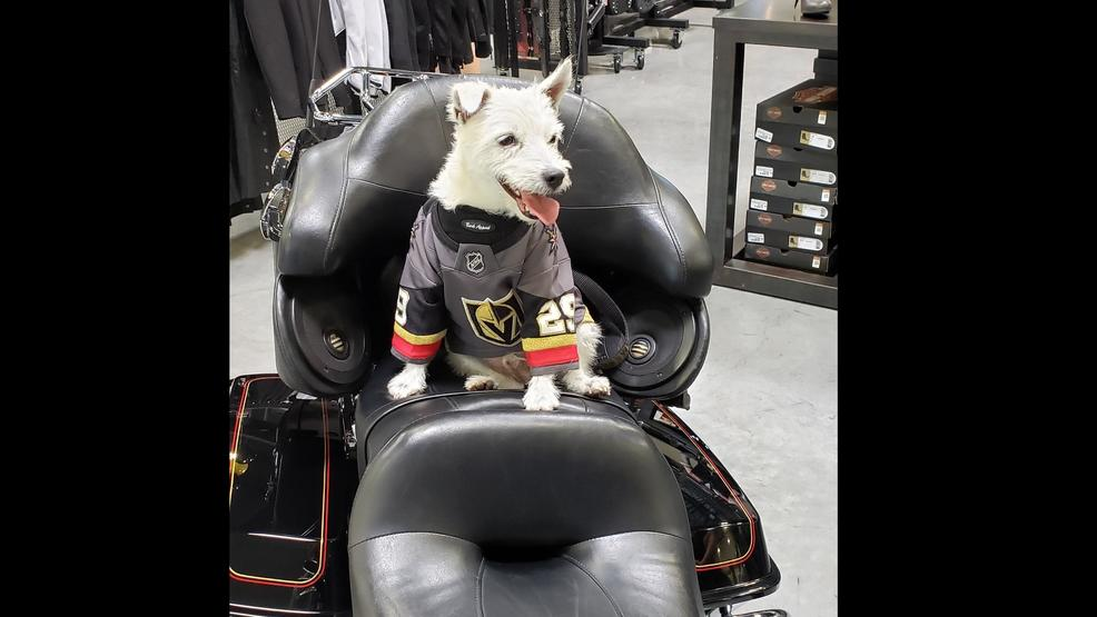 Las Vegas Harley Davidson hosts first ever 'Puck Party' featuring Bark Andre' Furry