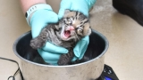 PHOTOS: Endangered ocelot kitten born at Oklahoma City Zoo