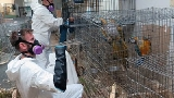 Bird breeder indicted on felony animal neglect charges, 245 birds with Oregon Humane