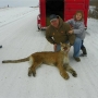 Mountain lion killed near La Plata, Mo