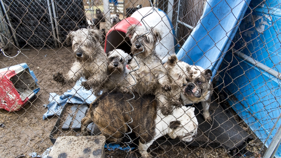 Aspca More Than 50 Dogs Removed From Puppy Mill Wpbn