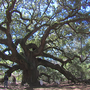Police: Woman climbs Angel Oak, screams obscenities