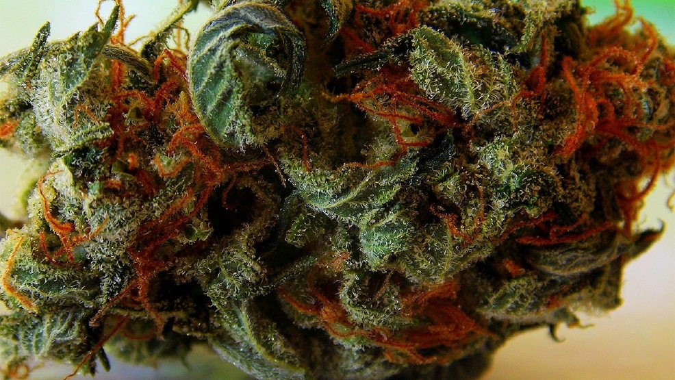 Bill proposed to reduce some marijuana penalties in Texas to
