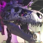 Photos: 'Sue the T.Rex' is finally here!
