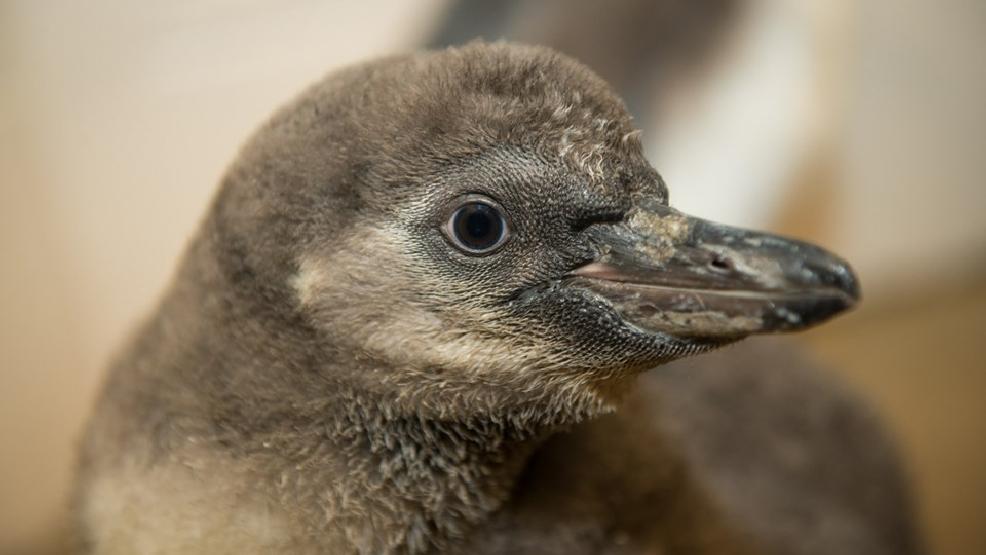 Penguin from Zoo.jpg
