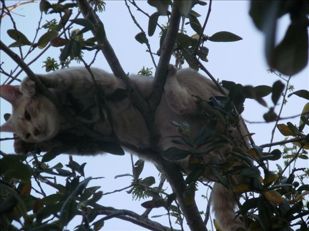 <a  href=&quot;http://share.valleycentral.com/media/517334&quot;>Stuck In A Tree</a>