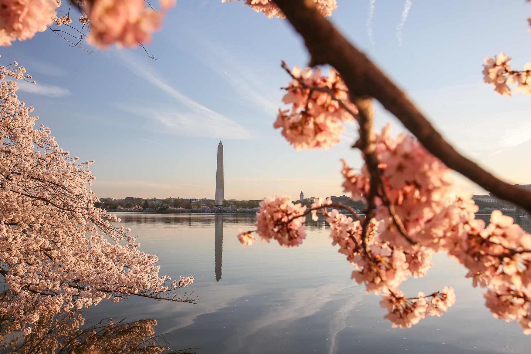 Fun fact! The Washington Monument weighs{ }81,120 tons.