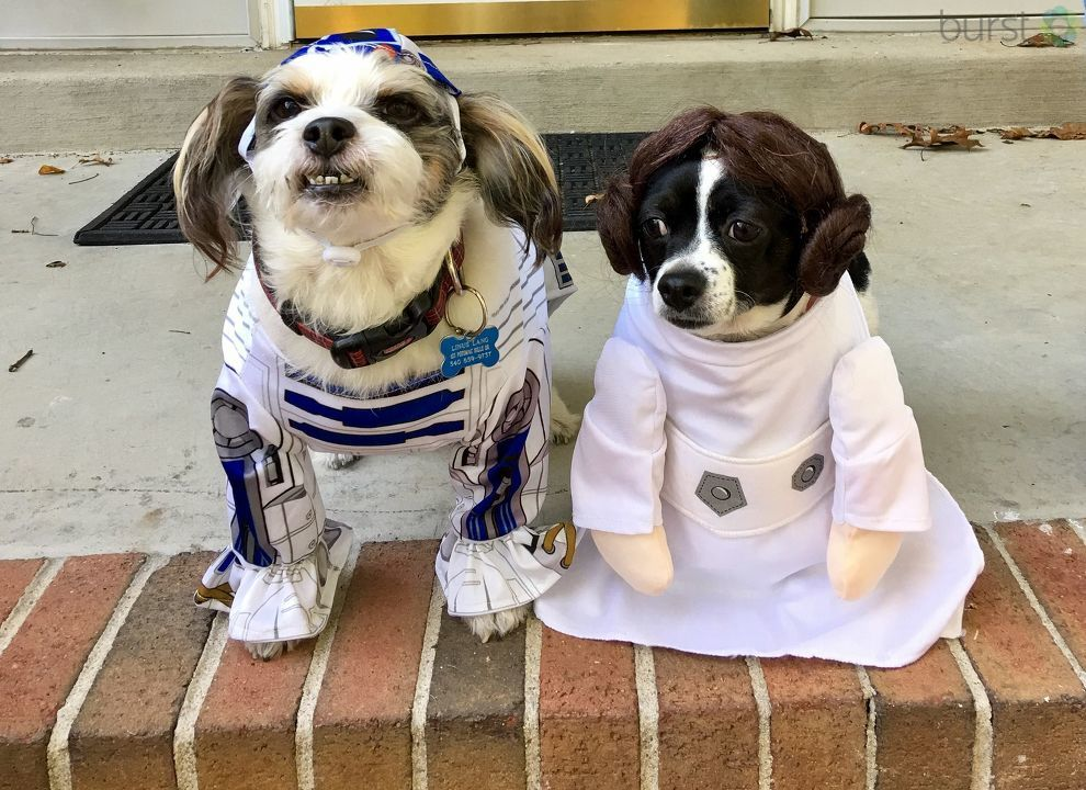 The only thing missing from R2D2 and Leah's costume was... (Image: Courtesy Andrea Lang)