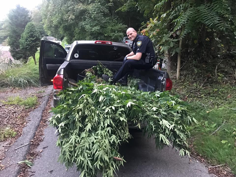 Police find 60 marijuana plants during bust on Charleston's East End.  (Charleston Police Department)