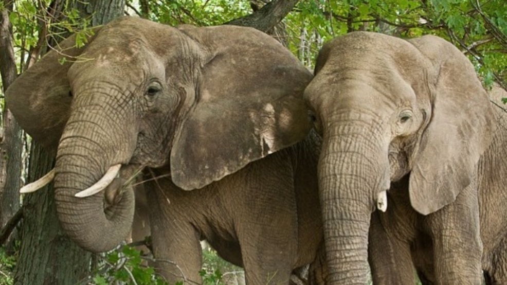 Pittsburgh Zoo Elephant Gives Birth To Calf One Month