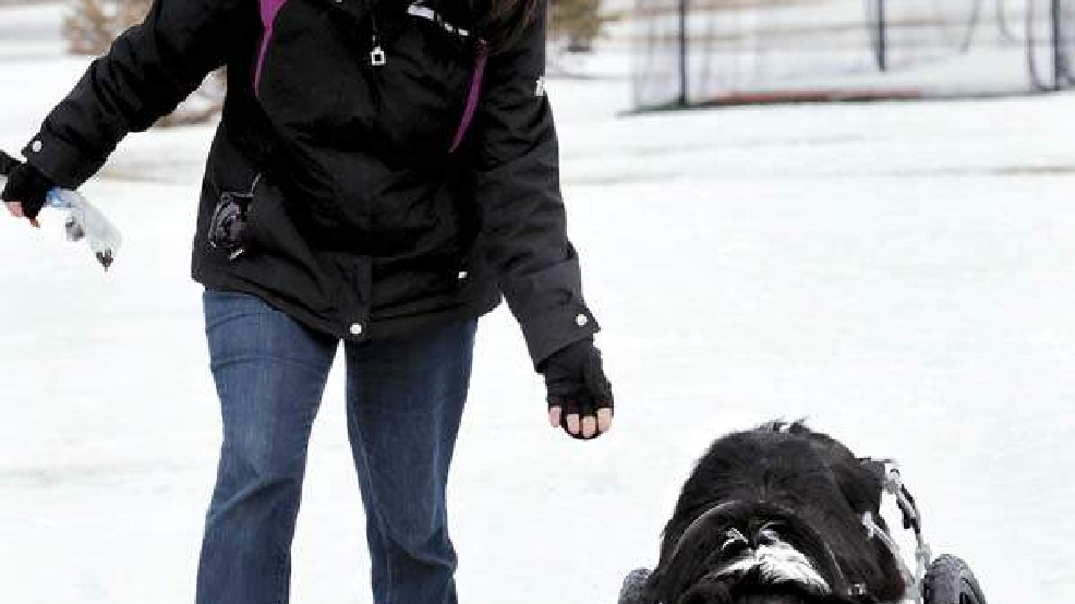 Kadee Mae using a wheelchair with skis, with her owner Shiela Lund. Courtesy of GazetteXtra.