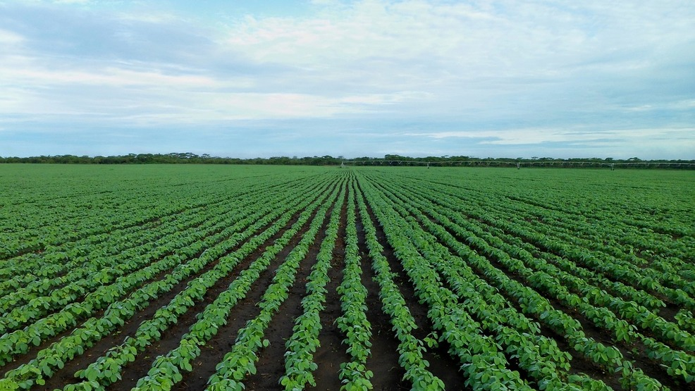 Soybean acres experience catastrophic drop, lowest level in 6 decades