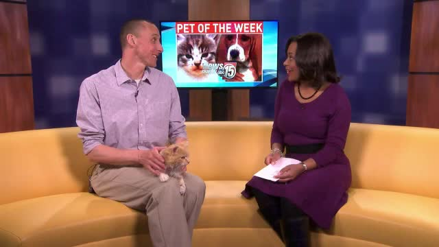 Pet of the Week: Abby