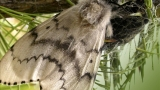 Third and final gypsy moth eradication scheduled Monday