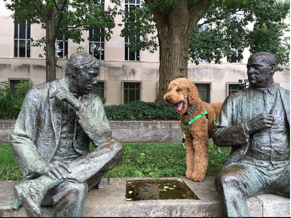IMAGE: IG user @mylesthedoodle / POST:  This is what I think about #chess #yawn #yourmove #whyarentthesemenpettingme #judiciarysquare #dcdog #dcdoodle #goldendoodle #dogsandpals #doodlesofinsta #dogscorner #igdc