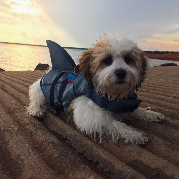 Bently has been chewing up the nation's capital since January 2016!  He loves being on the water, taking in the views of DC and spending time with dad. (IMAGE: IG user @bentlyindc)