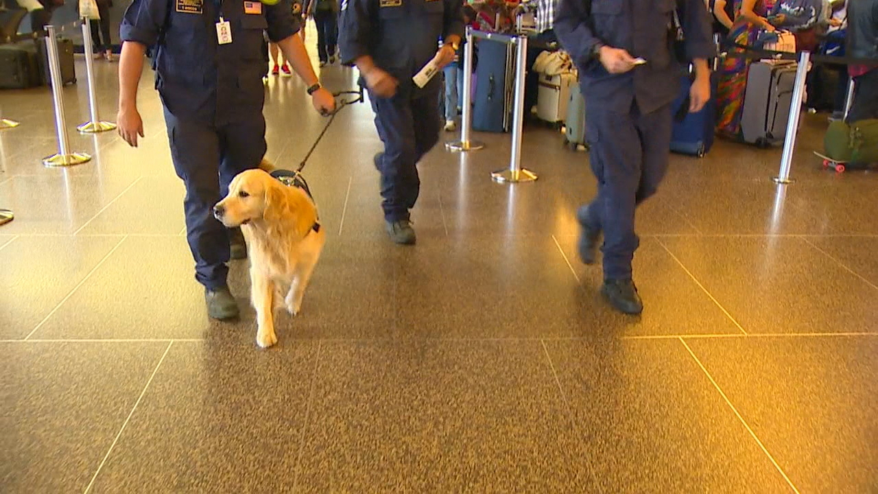 A group of eight men and women with Washington Task Force One members are heading to Georgia and will then be deployed to the areas hardest-hit by Hurricane Irma. (Photo: KOMO News)