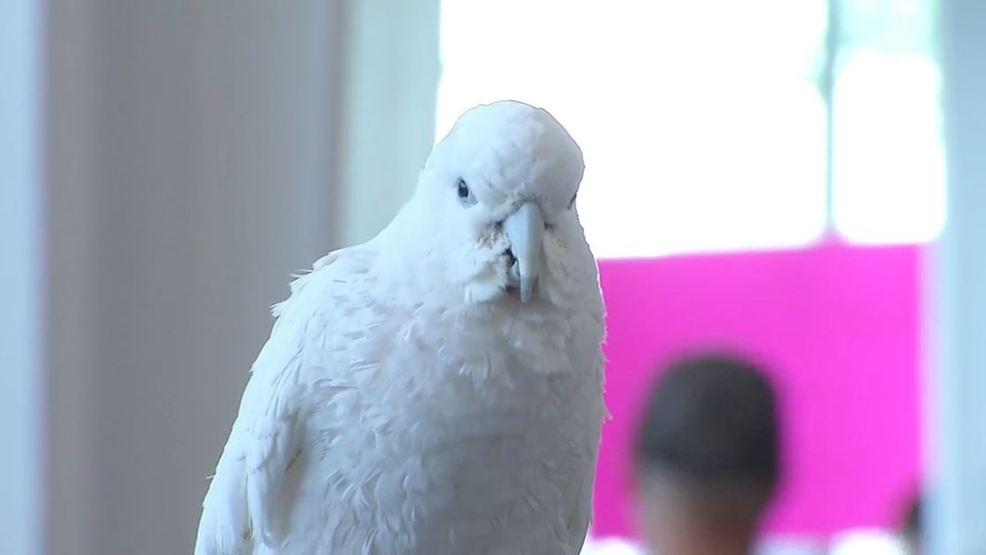 bird lovers gather at the illinois state fairgrounds wrsp