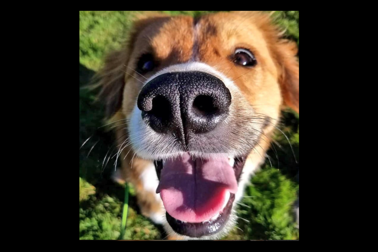 Darrel the Doge has a beautiful smile{ }(Image: Hailey Adair)