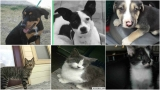 Pets in danger of being euthanized if not adopted, fostered