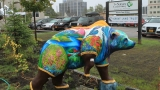 Colorful bear statues spring up in Alaska's largest city