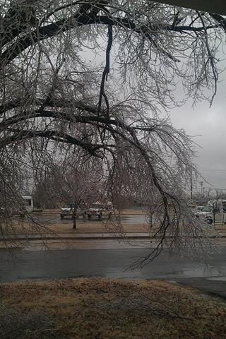The tree in our front yard is about to be touching the ground from Midwest City
