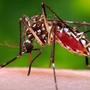 Six West Nile virus cases reported in a week; 11 cases reported this season
