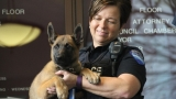 GALLERY | New Hendersonville K-9 police officers
