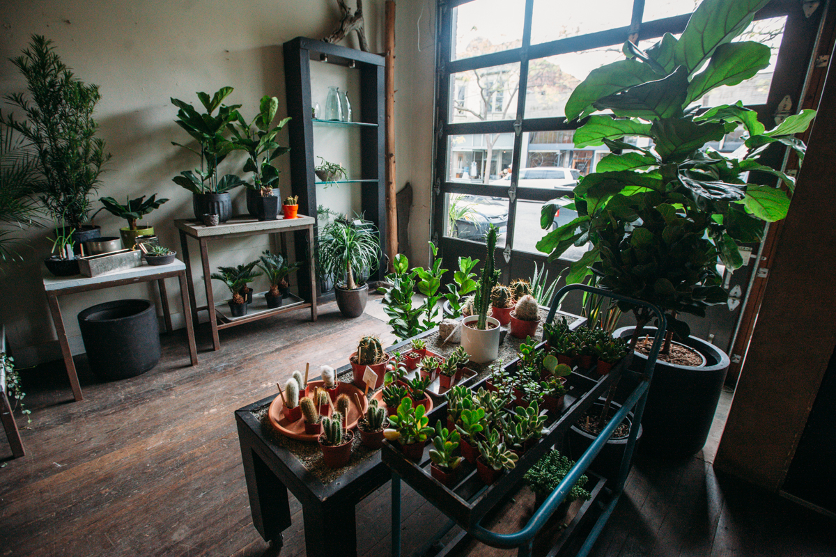 The Palm Room in Ballard exists to 'link you, your home, and nature together'. To do this, they need lots of plants: succulents, tropicals, marimo, epiphytes, etc. etc. You will find everything you never knew you needed. (Image: Joshua Lewis / Seattle Refined)