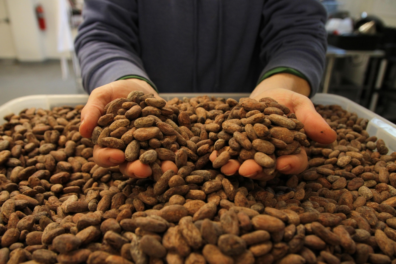 The cacao is stored in large bins to accommodate Undone Chocolate's small space.(Image: Amanda Andrade-Rhoades/ DC Refined)