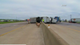 Gallery: Truck carrying pigs overturns on Texas highway