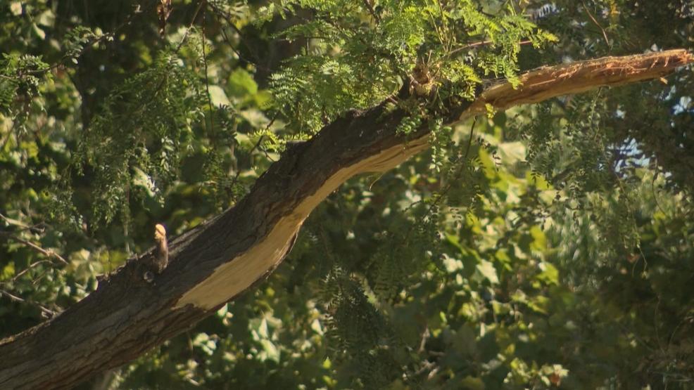 arborist will survey area where falling tree branch killed woman kepr