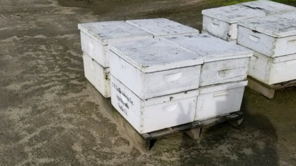 Reward offered to catch thieves stealing beehives from