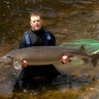 Volunteers guard giant sturgeon on Black River