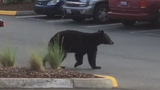 New bear sightings reported in King County