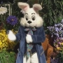 Easter Bunny visits UP Mall